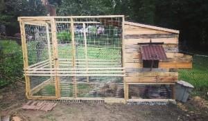 Custom Chicken Coop